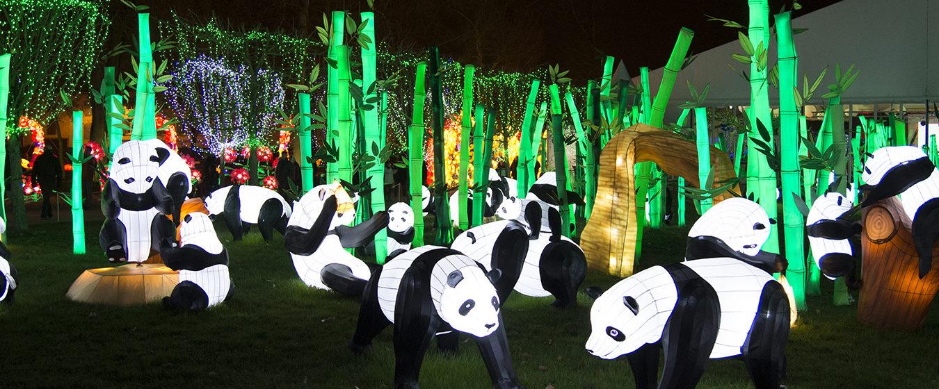 Les lanternes féeriques de Chine se rallument à Gaillac