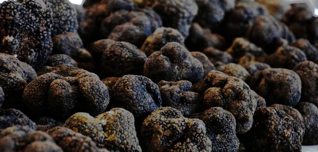 Les truffes, un produit du terroir du Sud-Ouest