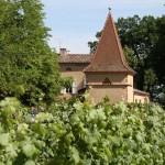 pigeonnier et vigne du château Touny les Roses